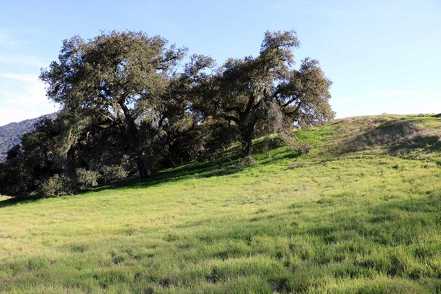 5 Black Mountain Trail Outside Area (Inside Ca), CA 93923 - MLS #: ML81643001